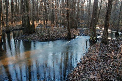 Tupelo River Swamp