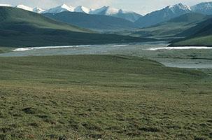 National Wildlife Federation, Georgia Wildlife Federation and Other Affiliates Urge Congress to Permanently Protect Arctic Wildlife Refuge