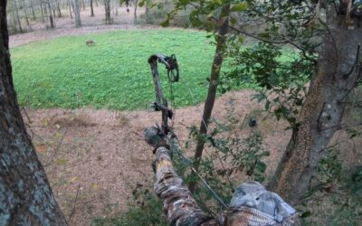 Getting Your Private Lands Ready for White-Tailed Deer Bow Season